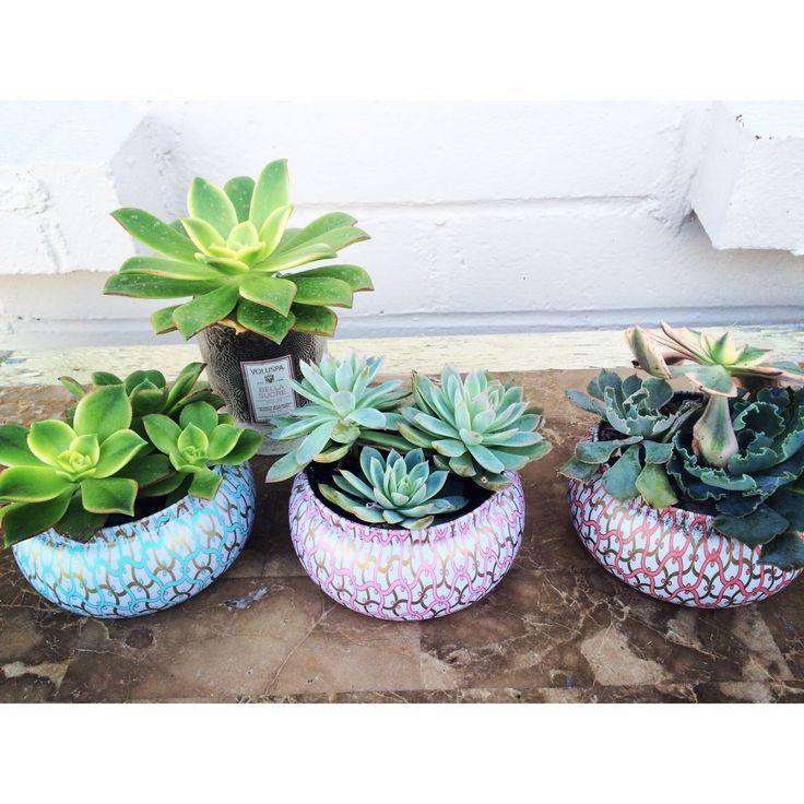 I absolutely LOVE voluspas candels! I burn through them like crazy! & I always save the tin because they are so cute. A friend at work (can't take the credit) gave me the idea to plant succulents in them! Here's to the start of my voluspa succulent garden!