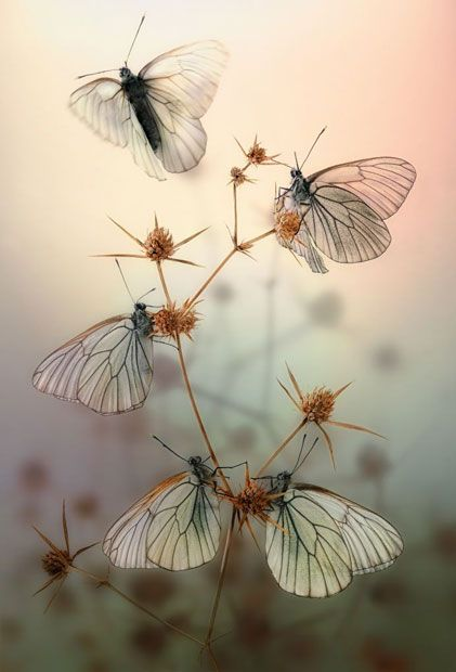 An Aporia Crataegi (Black-veined White): Amazing reptiles and amphibians photographed by Igor Siwanowicz