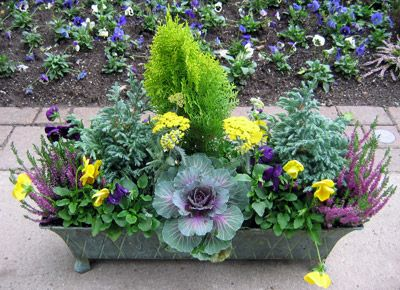 Cabbage, Lemon Cypress, and violas. We can help you do this for your winter containers.
