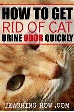 25 Beste Idee 235 N Over Urine Geuren Op Pinterest Hond