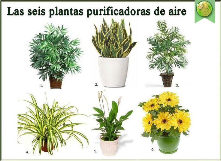 El aire exterior es más limpio y preferible al aire en interiores. ¿Por qué? Una de las razones es que los árboles y las plantas están en constante...