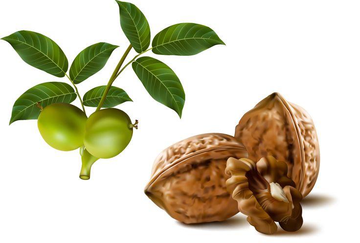 Frutta: noci