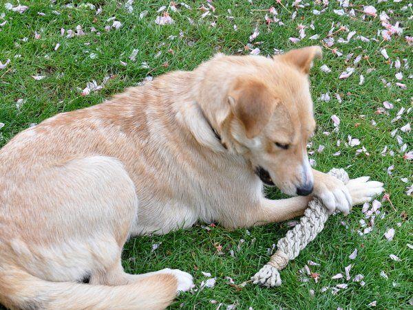 Kutyajáték fonás 2.0 - Masni / Simple dog toy DIY