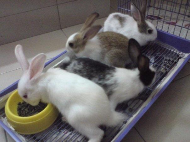 luilui (Louise) & friends: Luilui Louise
