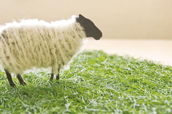 羊の毛刈りメッセージカード | 室町スピード印刷:デザイン企画・制作・販売