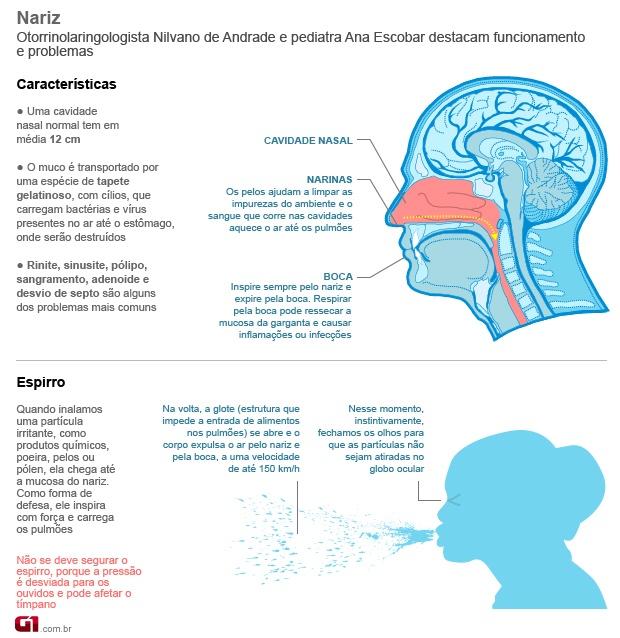 Infográfico sobre as características e curiosidades da região nasal.