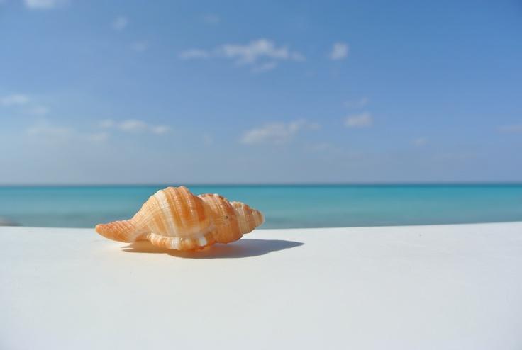 Beauty, I love shells and blue blue oceans! Varadero, Cuba <3