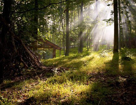 Log Cabin Holidays & Luxury Woodland Lodge Breaks UK - Forest Holidays looks amazing