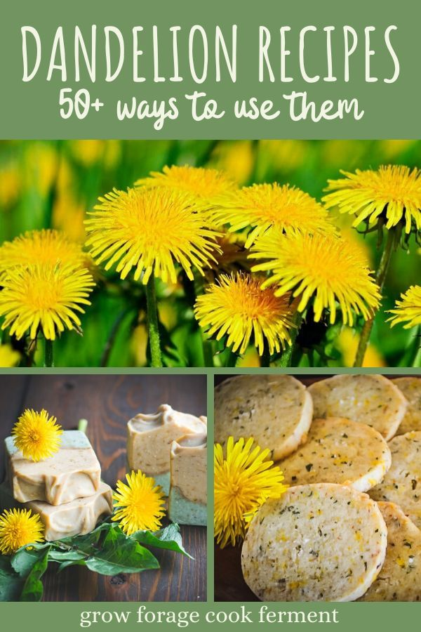 50 Dandelion Recipes Drinks Sweets Soap Remedies More In 2020 Dandelion Recipes Dandelion Beer Recipe Spring Recipes