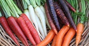 Here are some tricks on how to grow carrots from seed in your organic vegetable garden. Learn how deep to plant carrots and when to plant carrot seeds.