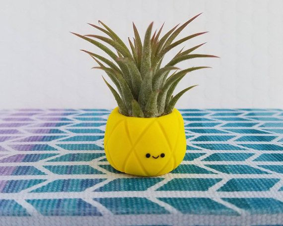 Air Plant Pineapple, Air Planters, Small Tillandasia Pineapple Air Plants, Cute Air Plant Holder, Desk Accessory, Teacher Gift, Gift for Her