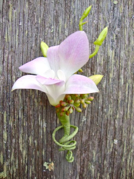boutonnieres & corsages Wedding Flowers Photos on WeddingWire