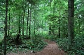 A forest is a large area of land covered with trees or other woody vegetation. Hundreds of more precise definitions of forest are used throughout the world, incorporating factors such as tree density, tree height, land use, legal standing and ecological function.