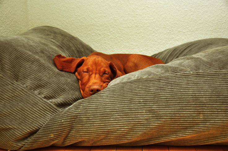 Are you also having a lot of trouble getting out of bed on monday mornings? ..... Heb je op maandagochtend ook altijd zoveel moeite om op te staan? www.dogscompanion.com