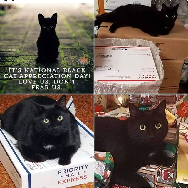It S National Black Cat Appreciation Day We Love Our Black Cat Wolfie Blackcat Roc Rochesterny Rocliv Black Cat Appreciation Day Cats Cats Of Instagram