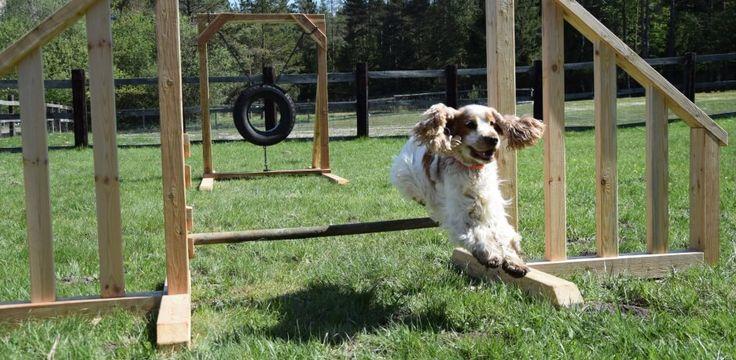 eingezäunter Hundespielplatz für Hundeurlaub am Campingplatz Rosental   Camping mit Hund am Campingplatz Rosental Roz in Kärnten - Österreichs südlichster Campingplatz  #urlaubmithund #hundeurlaub #camping #campingmithund hunde #hund #rosental #kaernten #oesterreich #austria #zelten #karawanken #ferien #urlaub #ferienmithund #hundefreundlich #austria #carinthia #hundespielplatz #jumpingdog #dogs #dog #ferien #sommer #sommer