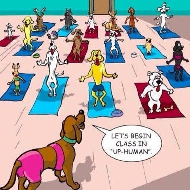 If dogs took yoga...