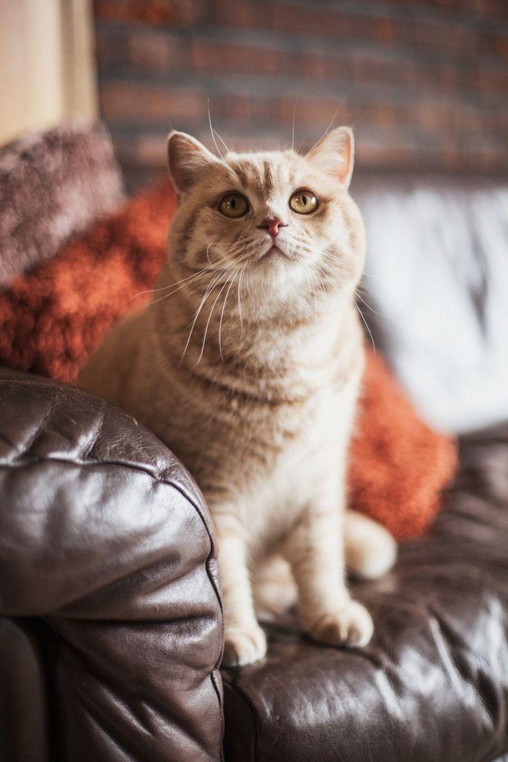 34 best Cats images on Pinterest