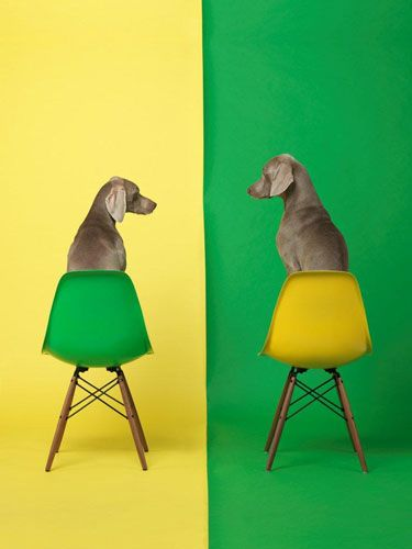 William Wegman  I chose this photo because I like the contrast between the green and the yellow.