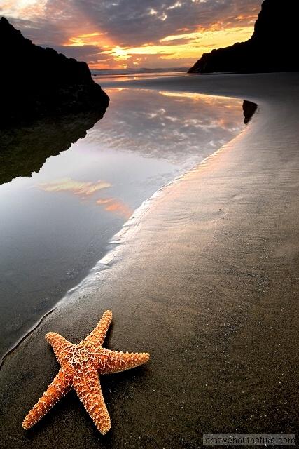 "❥ ""Starfish Sunset"" Rick Lundh: Favorite Places, Sky Sun, Beaches Life, Conchas Caracoles Estrella, Fascinators Place, Starfish Sunsets, Beaches 3, Caracoles Estrella De, Sun Stars"