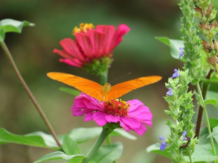 La biodivercidad se manifiesta en su plenitud y belleza  cuando el hu-mano y la naturaleza conviven en armonía. Imagenes del Parque Temático de la Doble Espiral.