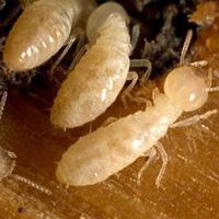 Termite Treatment Bangalore