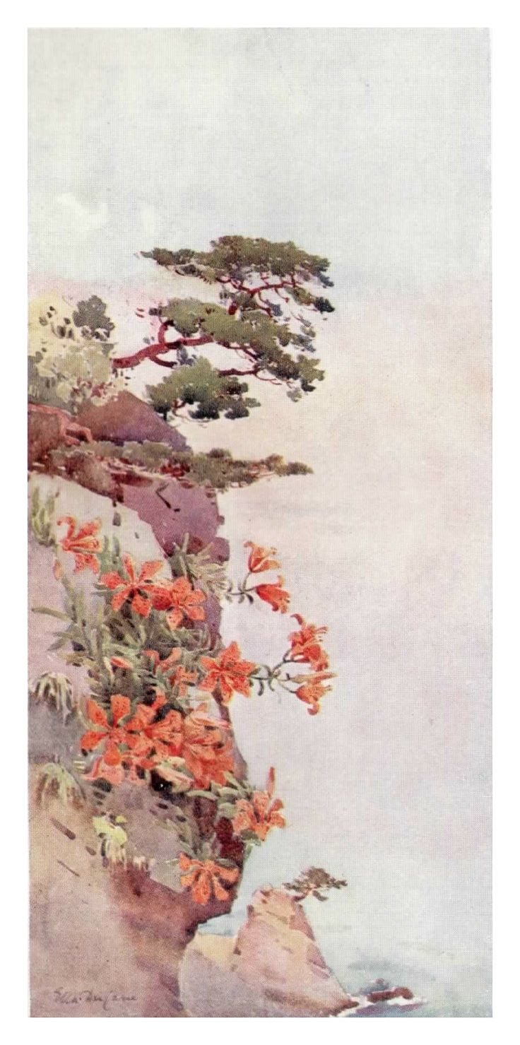 """With the pine tree peaking over the edge of a cliff, """"Lilies on the Rocks, Atami"""" by Ella Du Cane brings to mind a scene from the original Karate Kid. One of the trees tended by Mr Myagi was growing on a small cliff face near the sea."""