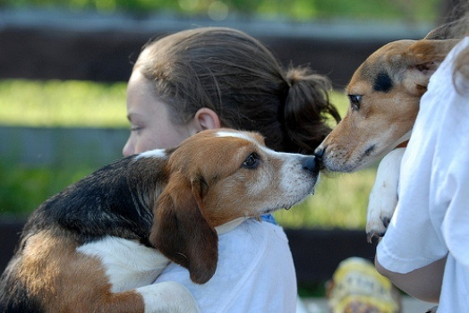 The dogs, who were kept in cages their entire lives, were some of the first rescued by the Beagle Freedom Group from product-testing labs in Spain.