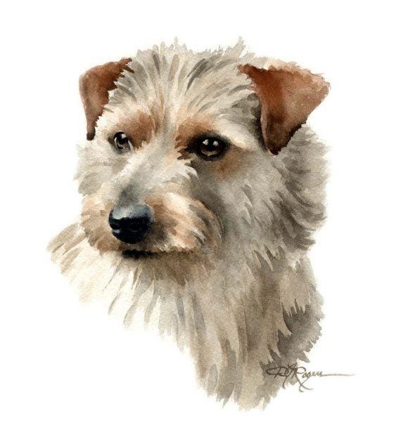 NORFOLK TERRIER chien aquarelle Art Print signée par l'artiste DJ Rogers