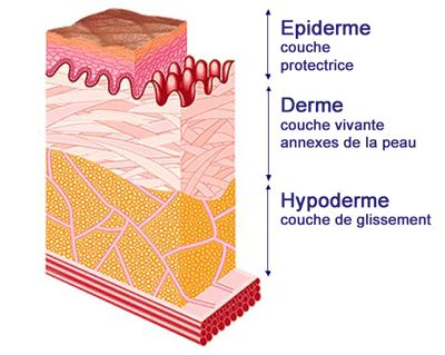 http://www.monsitebeaute.com/dossiers/beaute/problemes-de-peau/peau-seche-ou-deshydratee