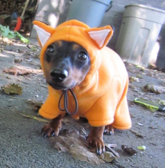 small dog in fox costume. omg.