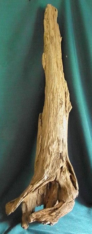 "Nique of Cypress 24"" Long by 10"" Wide by 6"" Deep 48.00 Aquarium Driftwood for Sale"