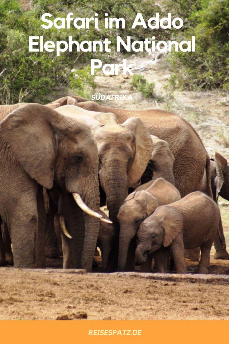 Es gibt nichts Schöneres als Safaris in Südafrika. Im Addo Elephant National Park kannst du jede Menge Elefanten sehen.