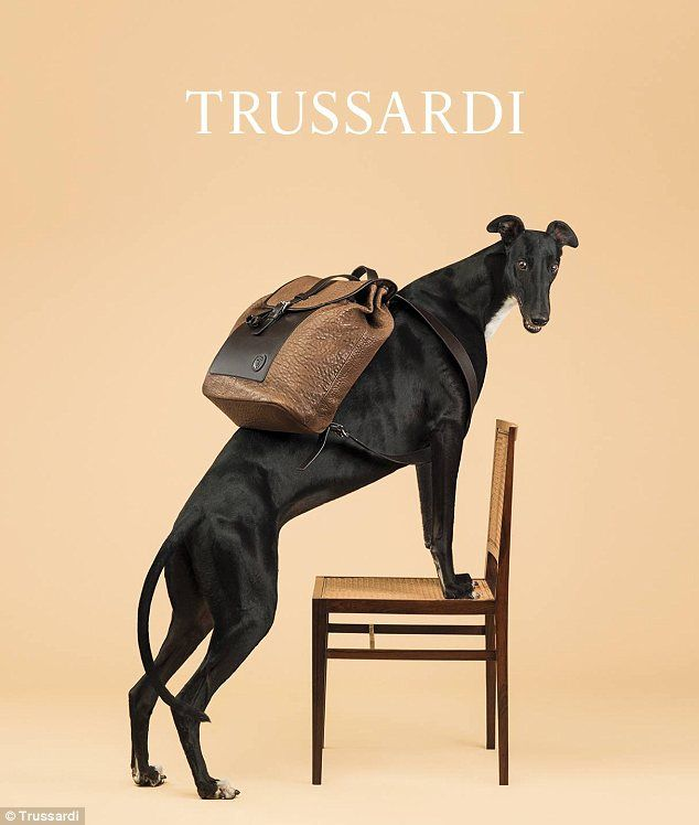 TRUSSARDI Monday with discount up to 80%! https://storebrandsvip.com/b2b/products/?category=2&brand=25&page=1&_=1499678635427
