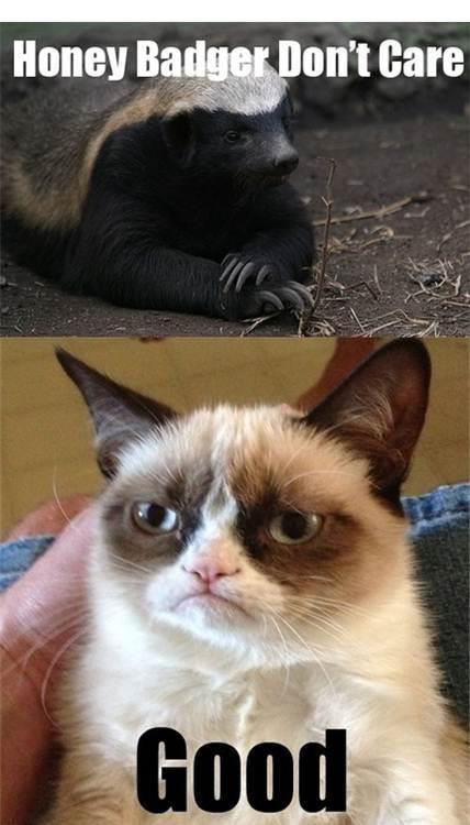 honey badger vs grumpy cat  | From #Humor Pinterest board, @BadgerMaps