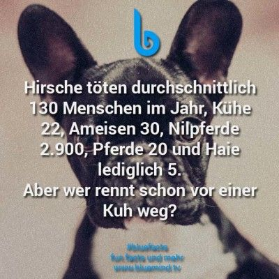 46 unglaubliche Fakten über Tiere – Natalia Bauer