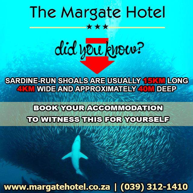 Don't wait until it's too late! Book your accommodation for the world renowned South Coast Sardine Run NOW! Our booking agents are standing by to take your calls.  For more information please contact us suzette@margatehotel.co.za | (039) 312-1410