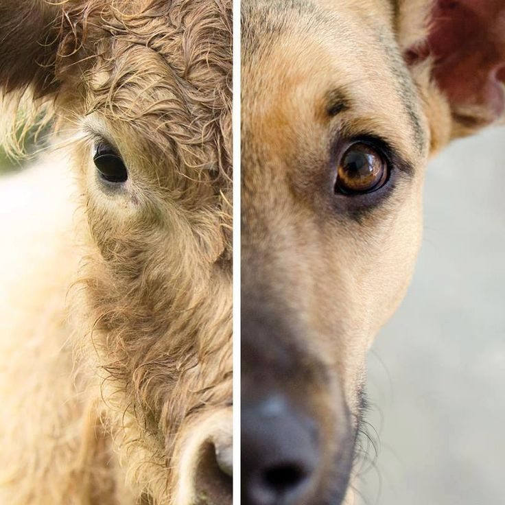 The only difference is your attitude  Vegan for the animals // Save the animals  Photo: Mercy For Animals | WorldofVegan.com  #Najha #najhashoes #corknajha #najhavegan #najhawalkincork