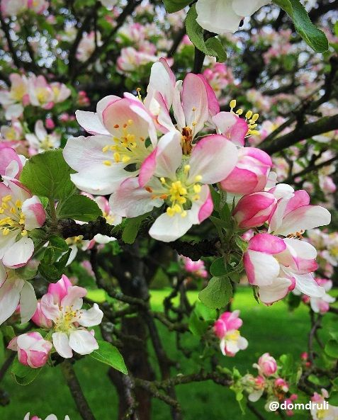 Hello spring, flower