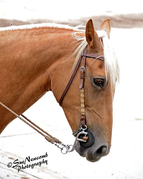 Palomino Horse by SueNewcombPhotos on Etsy.  Lovely Palomino waiting to enter a show arena.