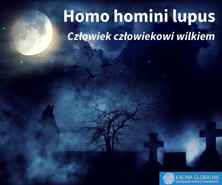 Homo homini lupus. Człowiek człowiekowi wilkiem. #sentencje #łacina #wilk http://lacina.globalnie.com.pl/sentencje-lacinskie/