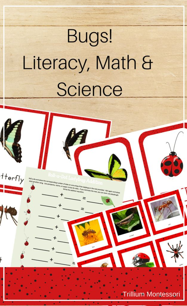 Bugs! 12+ Literacy, Math and Science activities for your bugs and insects unit.