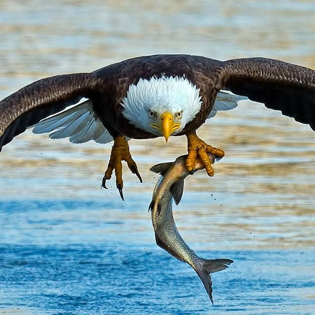 Pic of the Day..Brian Kushner - Audubon Photography Awards — with Zélia Ribeiro and Laurent Esmer Lora. #hudsonvalley