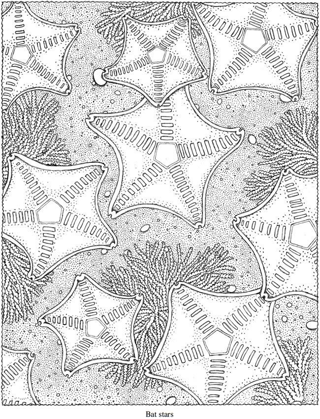 97 best Pearls coloring pages images on Pinterest Coloring books