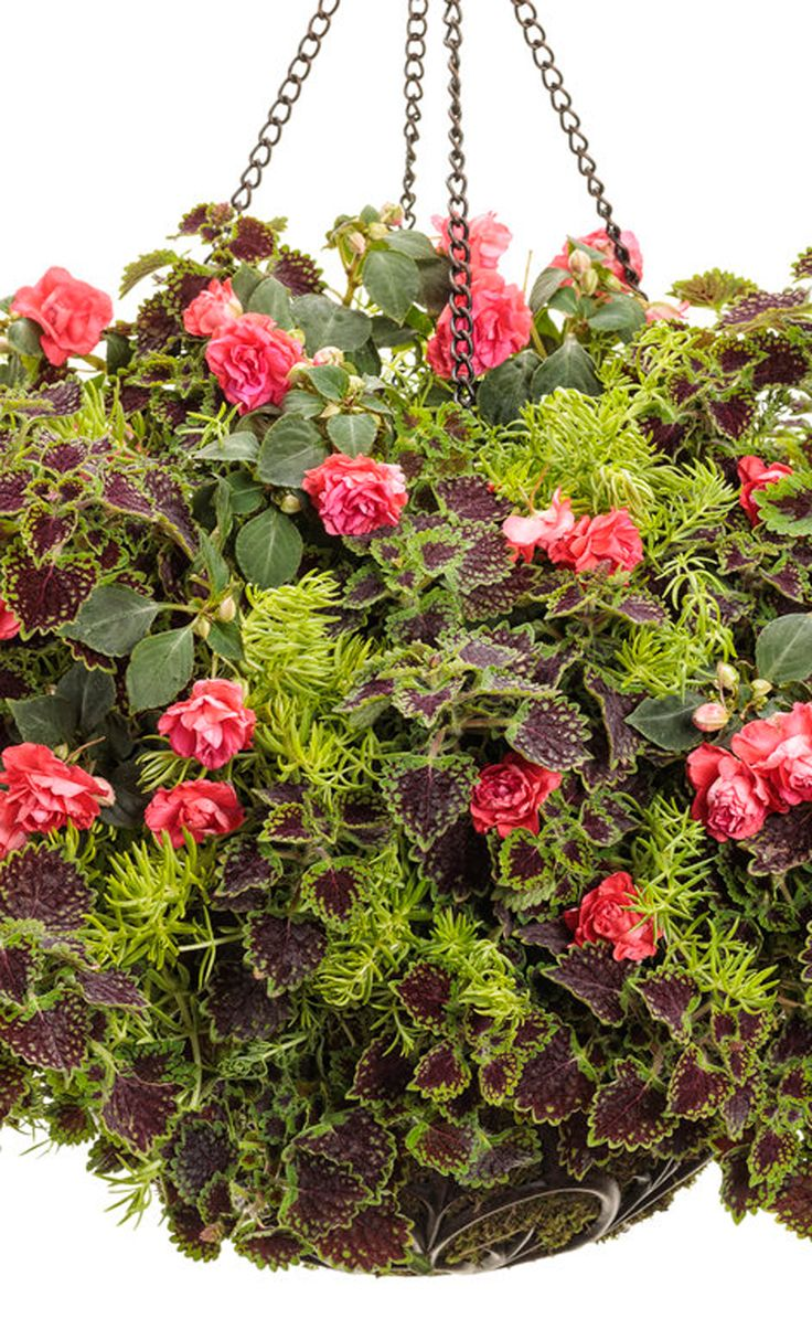 Texture is king in this hanging basket recipe! Spikey, yet