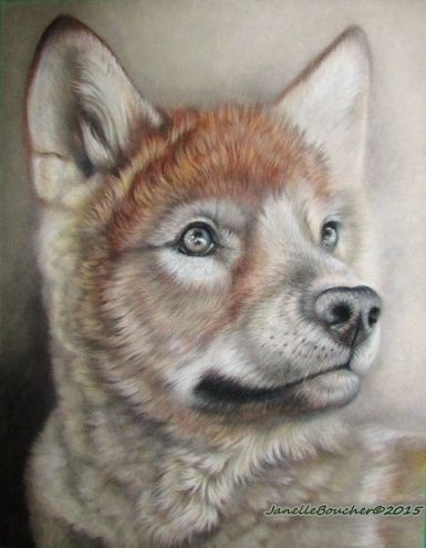 wolf cub in pastel ~ Thank you to Wildlife Reference Photos and Tambako PhotographyEmmanuel Keller for the precious reference !