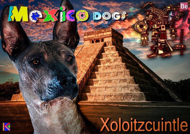 XOLO- MEXICO