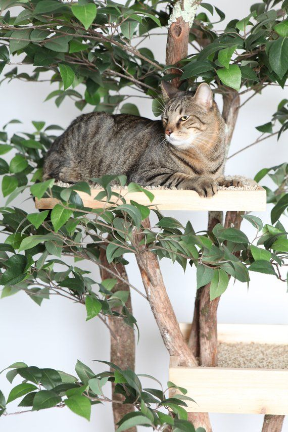 Sycamore Cat Pet Tree House Etsy Cat Towers Indoor Cat Indoor Pets