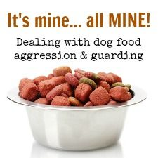 Puppies should learn early that 'guarding' or protecting their food, toys or treats from human family members is not okay.    It's a habit that can end up getting someone hurt.    Find out how to teach your pup to share.