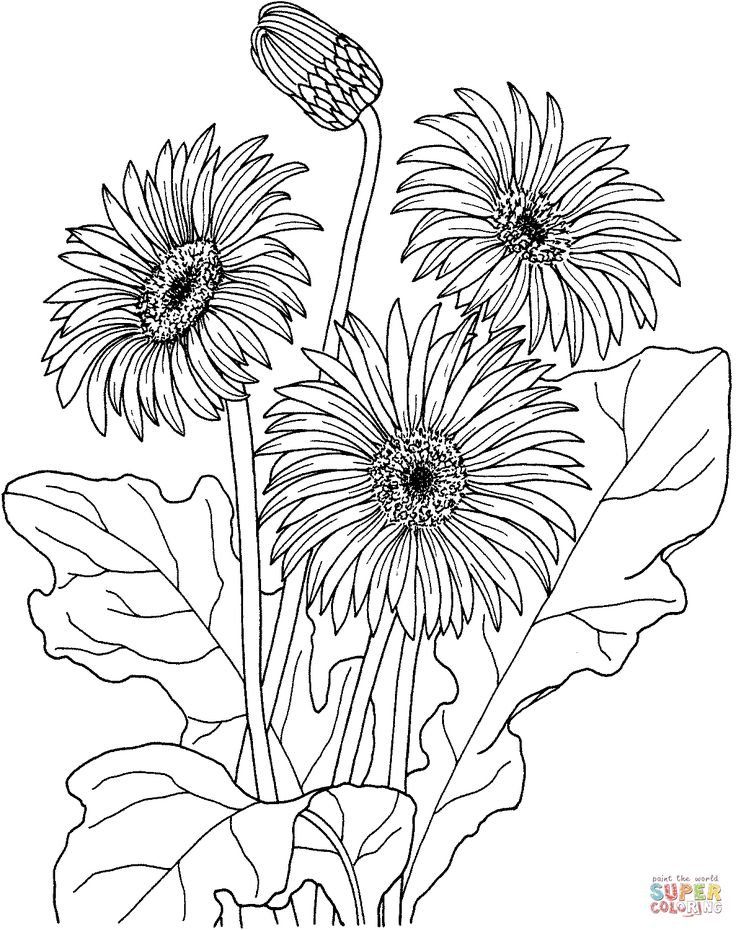 African Daisy Gerbera Jamesonii Coloring Page From Category Select 24848 Printable Crafts Of Cartoons Nature Animals Bible And Many More